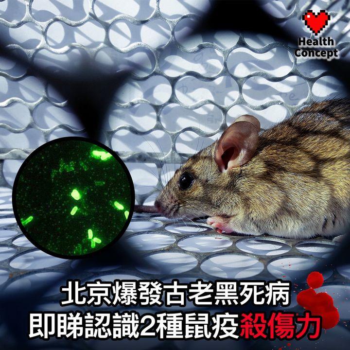 【#醫療熱話】北京爆發古老黑死病 即睇認識2種鼠疫殺傷力