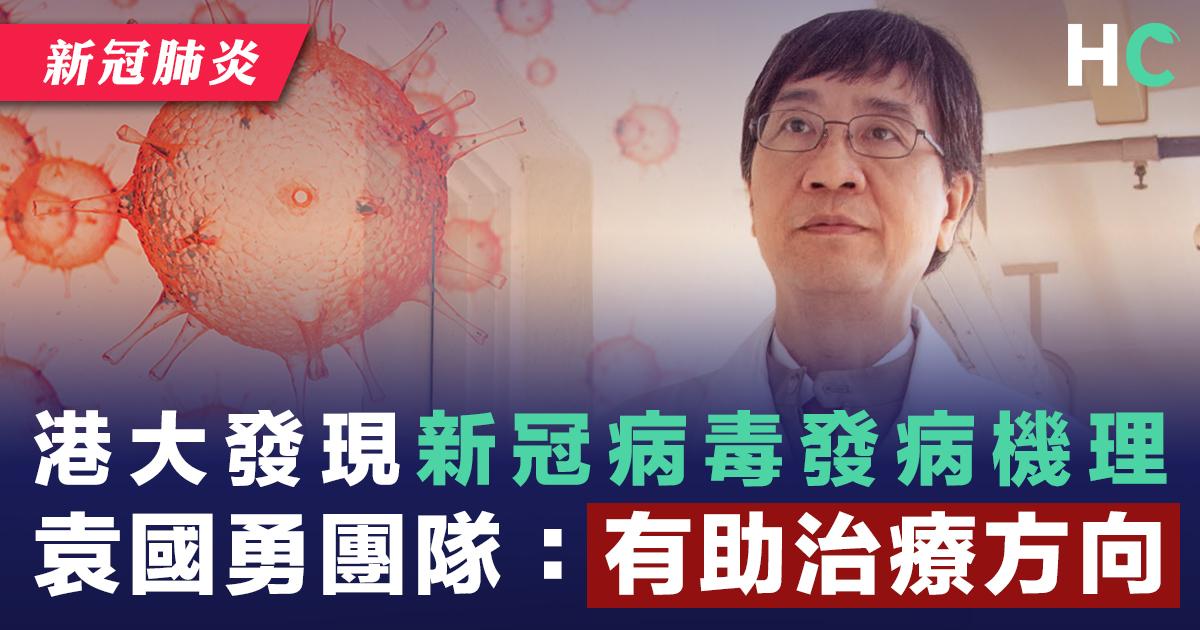 港大揭新冠病毒發病機理 袁國勇團隊:有助治療方向