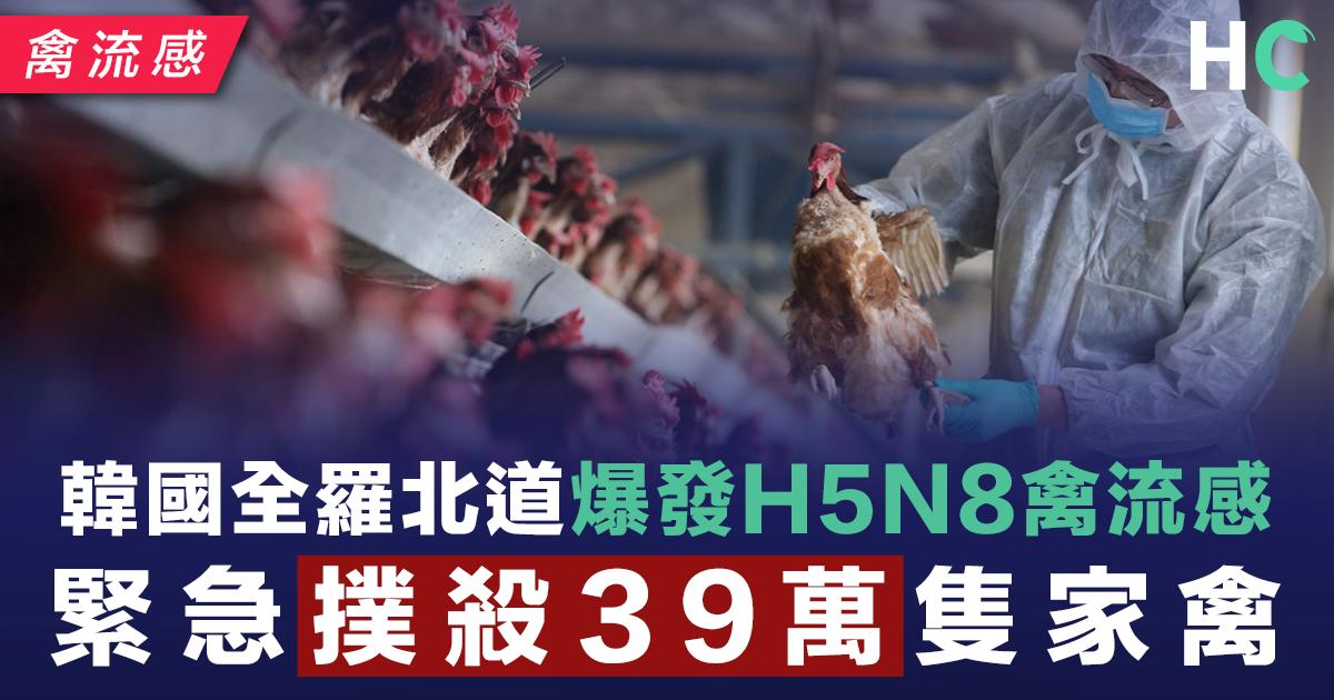 韓國全羅北道爆發H5N8禽流感 緊急撲殺39萬隻家禽