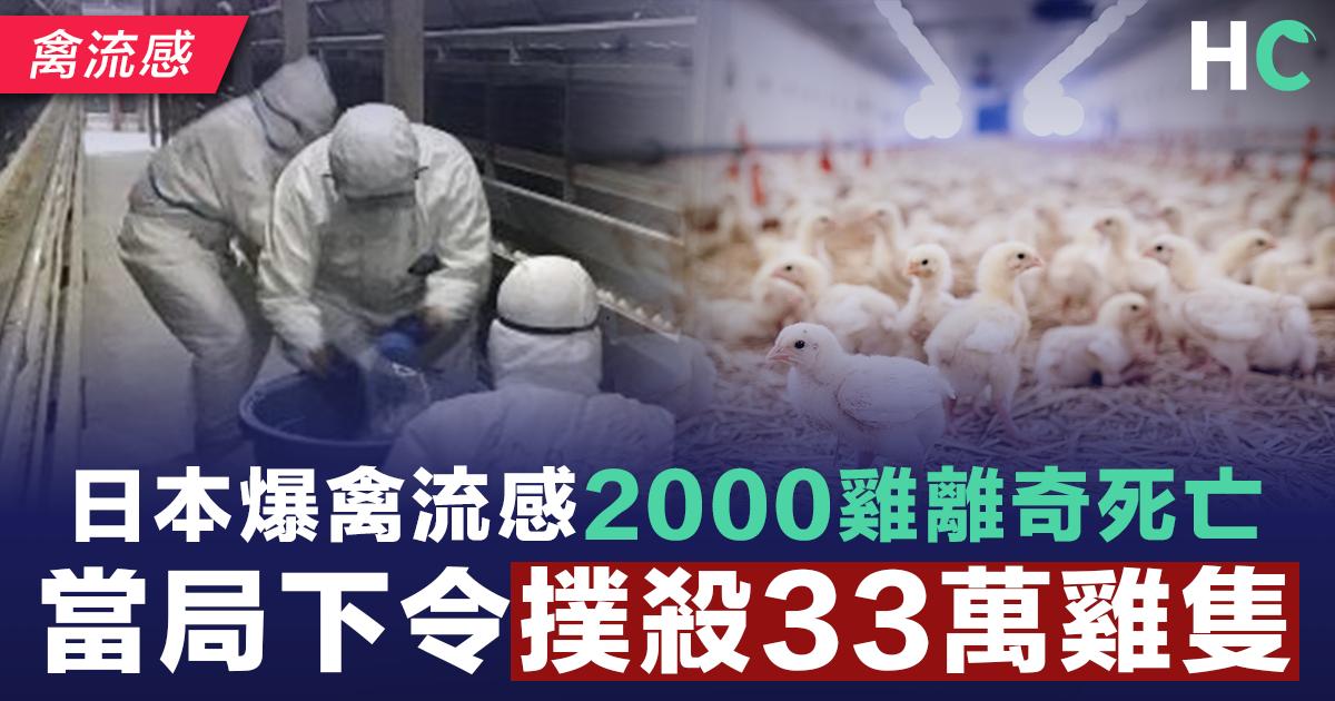 日本爆禽流感2000雞離奇死亡 當局下令撲殺33萬雞隻