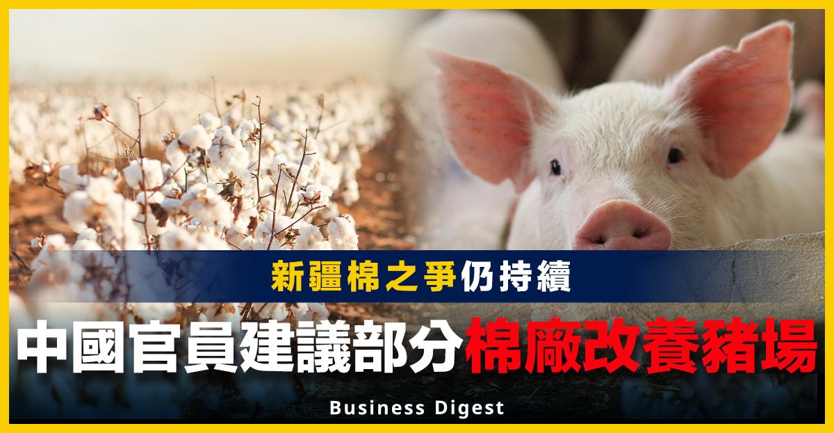 中國官員建議部分棉廠改養豬場