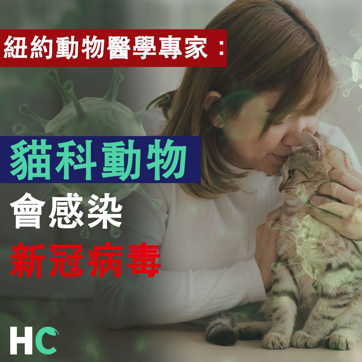 【武漢肺炎】紐約動物醫學專家:貓科動物會感染新冠病毒