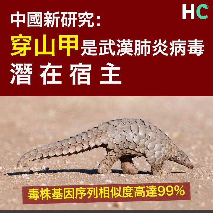 【#武漢肺炎】中國新研究: 穿山甲是武漢肺炎病毒潛在宿主