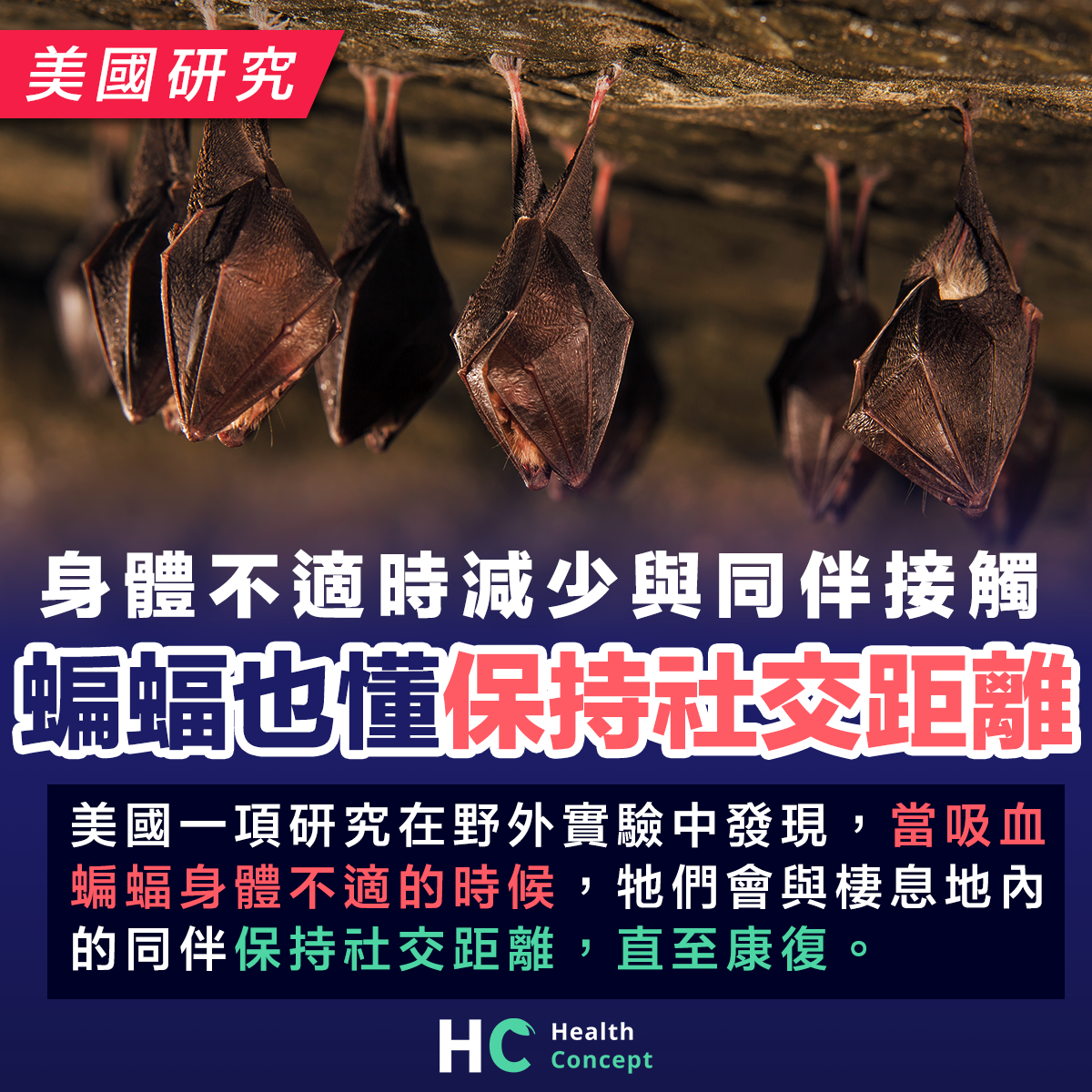 美國研究:身體不適時減少與同伴接觸 吸血蝙蝠也懂得保持社交距離