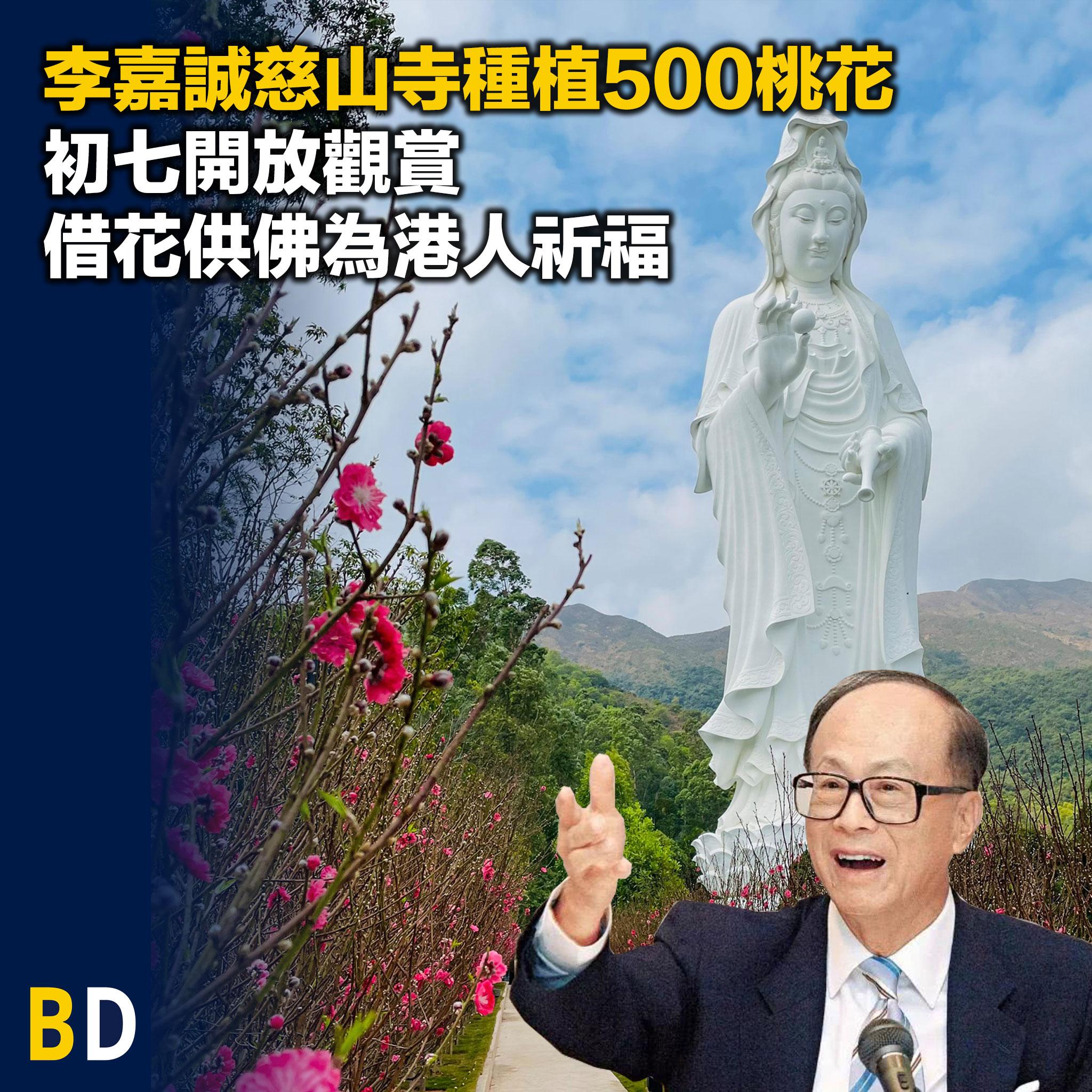 李嘉誠慈山寺種植500桃花,初七開放觀賞借花供佛為港人祈福