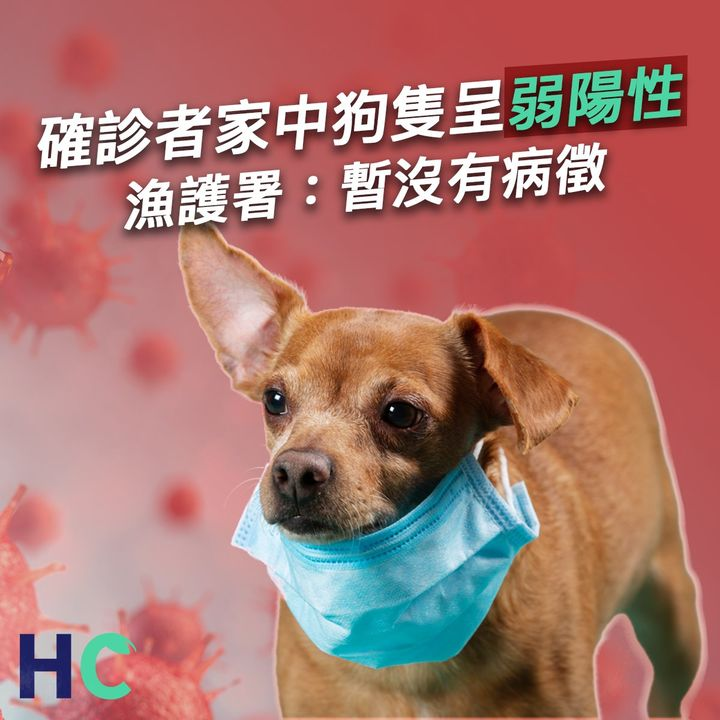 【#武漢肺炎】確診者家中狗隻呈弱陽性 漁護署:暫沒有病徵