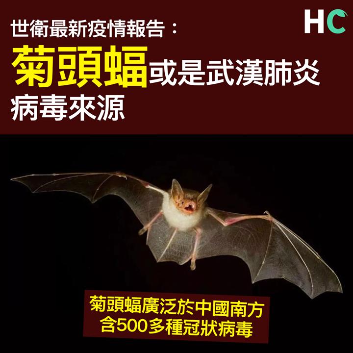 【#武漢肺炎】 世衛:菊頭蝠或是武漢肺炎病毒來源