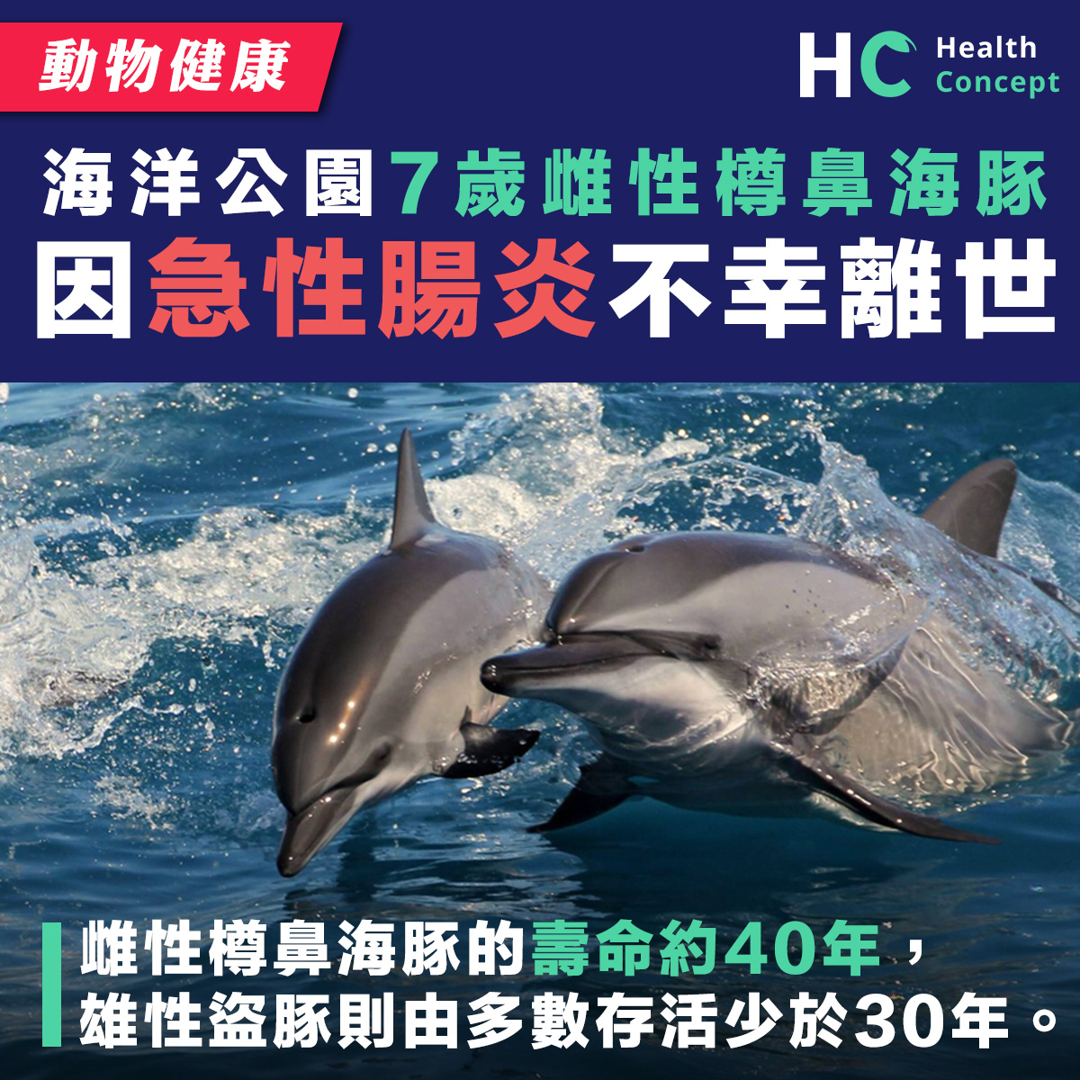 海洋公園7歲樽鼻海豚 因急性腸炎不幸離世
