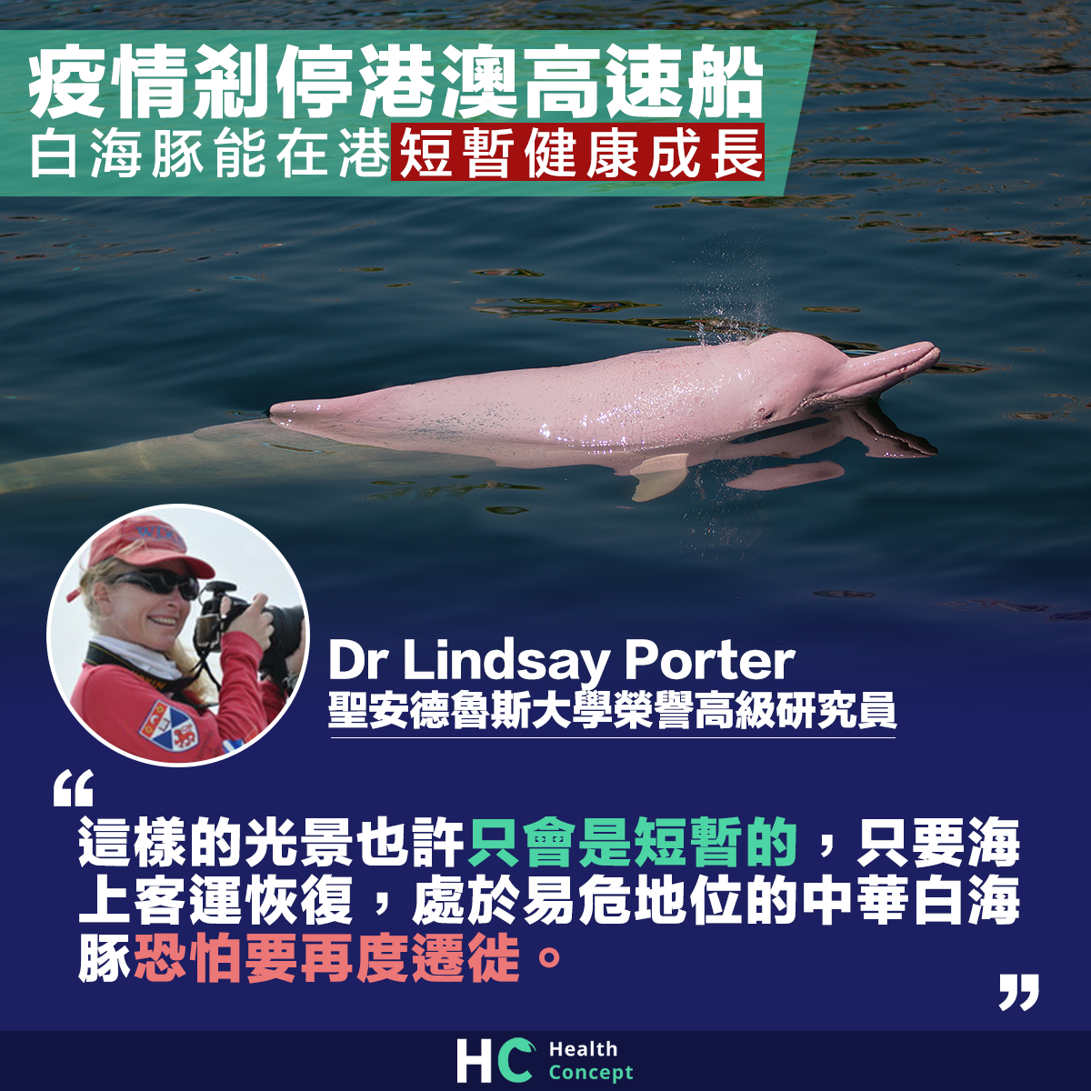 【白海豚再現】疫情剎停港澳高速船 白海豚能在港短暫健康成長